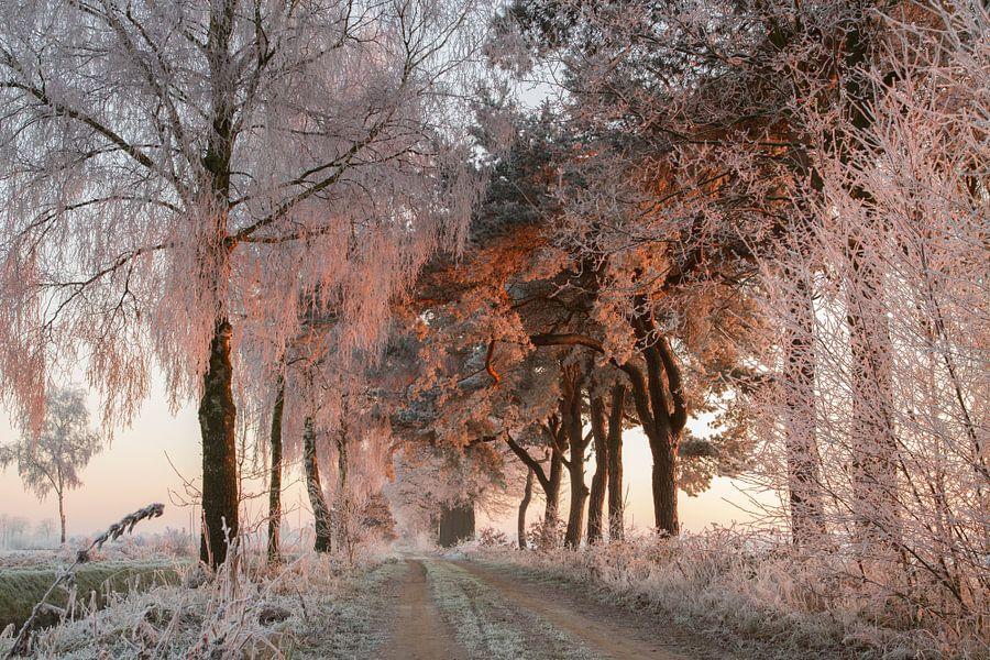 Rijp op de bomen word aangelicht door de opkomende zon van Paul Wendels