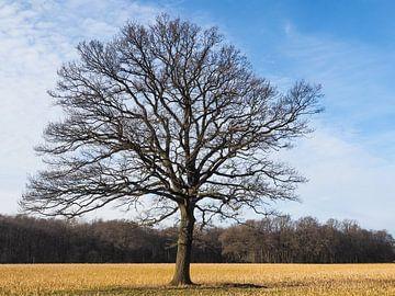 Eiche Quercus von Katrin May
