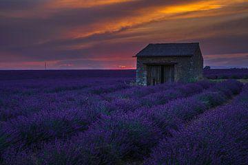 Astronomisch lavendelveld van Joris Pannemans - Loris Photography