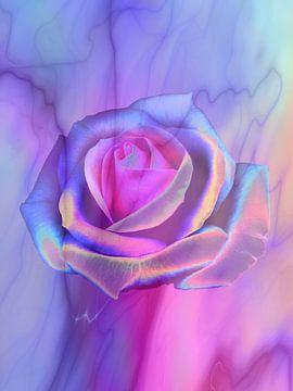 Popartrose in Pink von Claudia Gründler