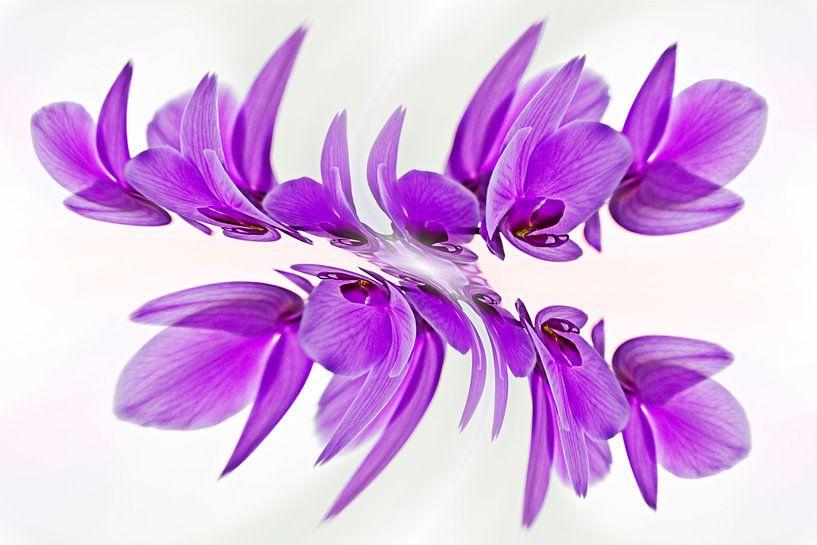 Vlinder-orchidee van CreaBrig Fotografie