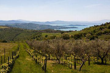 Vineyard Lago Trasimeno van