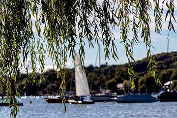 Linde am Starnberger See von Oguz Özdemir