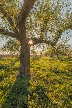 Baum mit Lichtpunkt von Moetwil en van Dijk - Fotografie