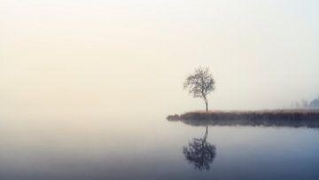 Baum im Nebel von Johan Rosema Fotografie