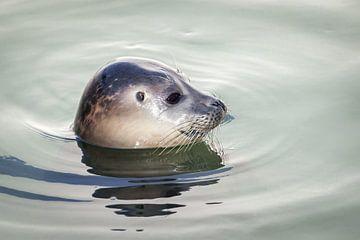 Zijwaarts portret van een zeehond van Simone Janssen