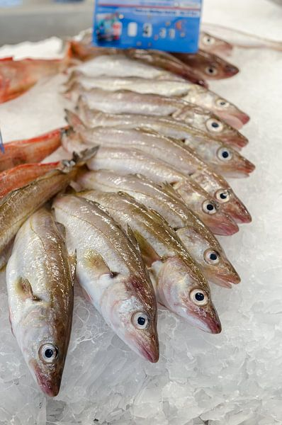 Verse vis op de markt van Mark Bolijn