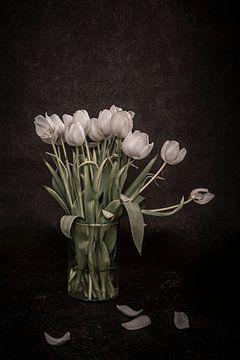 Tulpen van MvdVfotografie