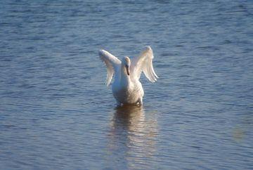 Een engelachtige zwaan. van Jurjen Jan Snikkenburg
