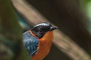Vogel kijkend in de lens van