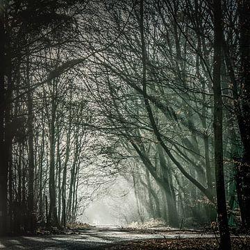 light in the wood  van Freddy Hoevers