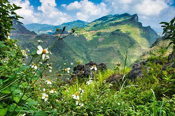Blumen in den Bergen von Bart Nikkels