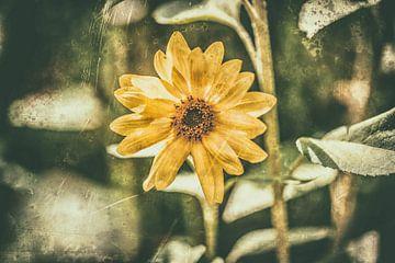Sunflower Retro van William Klerx