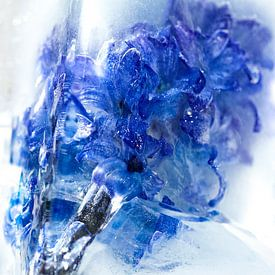 Frozen flower van Peter de Jong