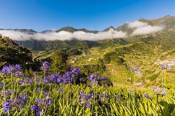 Schmucklilien bei Sao Vicente auf Madeira von Werner Dieterich