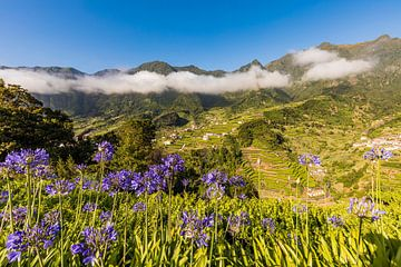 Sieradenlelies in de buurt van Sao Vicente op Madeira van Werner Dieterich