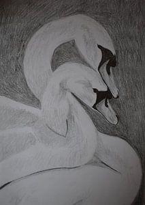 Zeichnung von zwei verliebten Schwänen, in Schwarz-Weiß