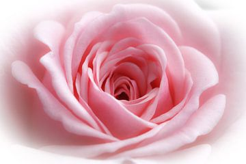 Roze roos in highkey (macro) van Fotografie Jeronimo