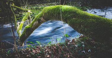 Betoverend magisch bos van Patrik Lovrin