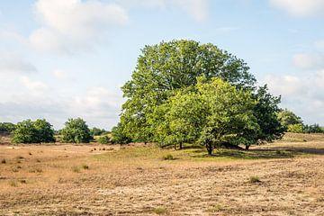 Laubbäume in einer niederländischen Dünen- und Heidegegend von Ruud Morijn