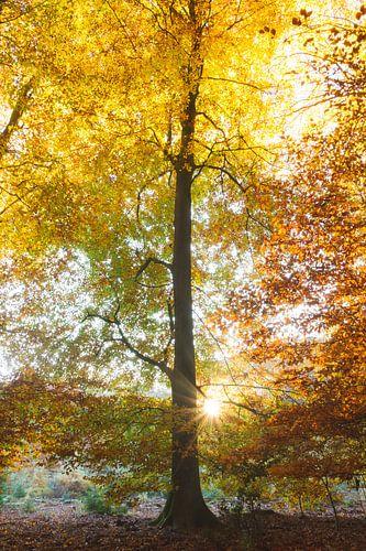 Magische zonsopkomst in de herfst van