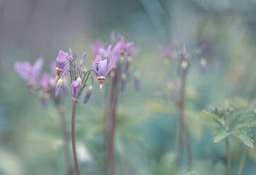 bloemen part 131 van Tania Perneel