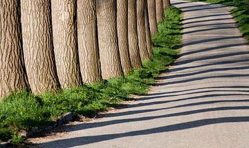 Bomenrij langs dijkhelling van Ger Loeffen