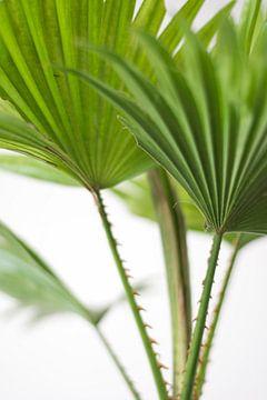 Palm (blad) von Jeantina Lensen-Jansen