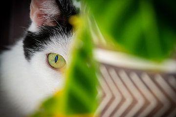 Verstopte kat staart je aan van Robin Velderman