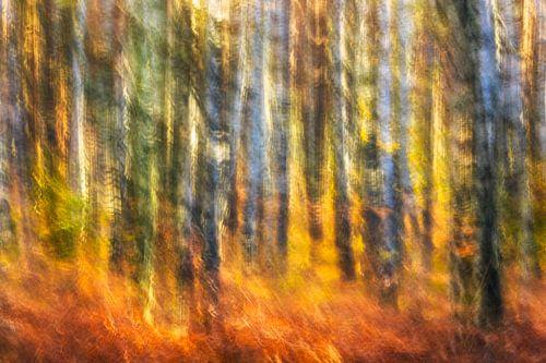 Herbstfeuer van Daniela Beyer