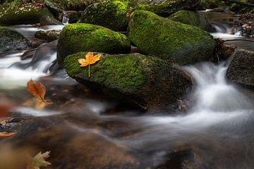 Stroom (koude Bode) in het Harz gebergte van Marc-Sven Kirsch