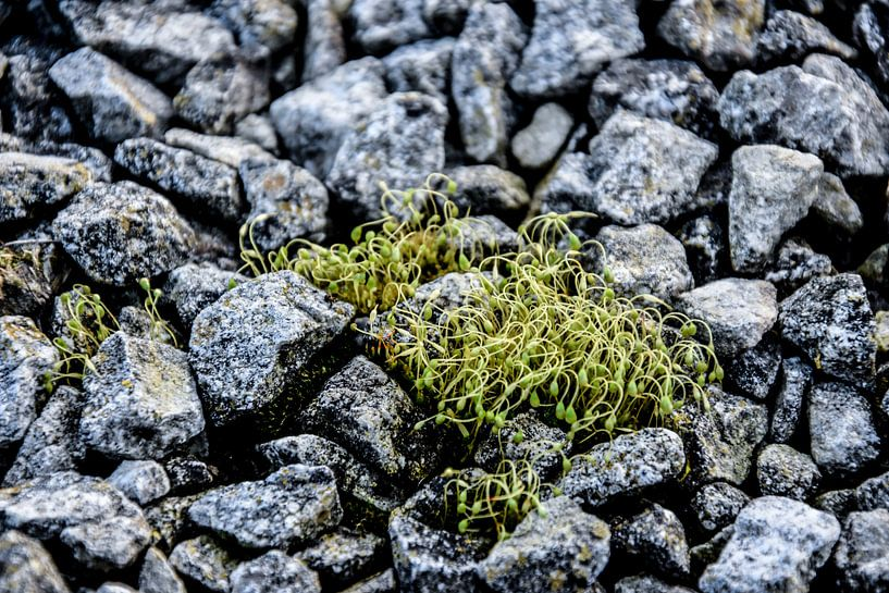 Stenen Jong groen  von Stef De Vos