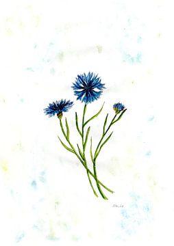 Kornblumenmalerei von Sandra Steinke
