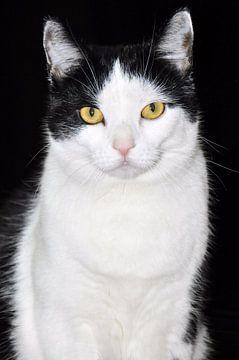 Black and white cat van