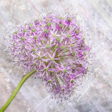 Bloem/Texturen/Flower von Corinne Cornelissen-Megens