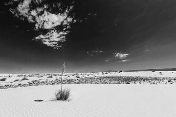 White Sands Impression Zwart-wit. van