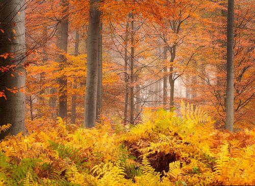 Herfst op zijn top in het Liesbos bij Breda. van