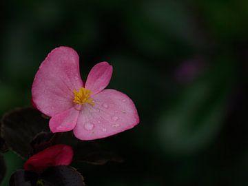 Pink Autumn van Wendy Drent