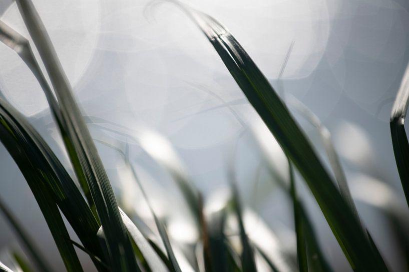 Gras van Petra Slingenberg