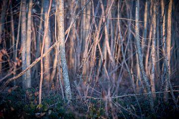 Waldlicht von Severin Frank