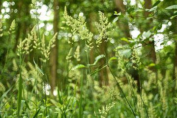 Fris Gras en Groene Blaadjes von Berthilde van der Leij
