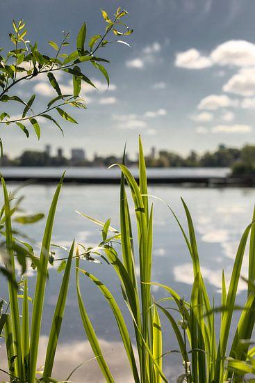 Kralingse Plas Rotterdam natuur van Rob van der Teen