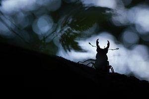 silhouet vliegend hert
