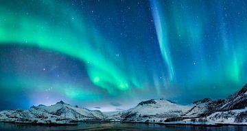 Nordlicht, Polarlicht oder Aurora Borealis am Nachthimmel über den Lofoten in Nordnorwegen. Breites  von Sjoerd van der Wal