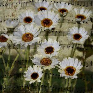 Sheet - Zomer melodie