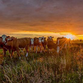 Zonsondergang in de polder van Wim Kanis