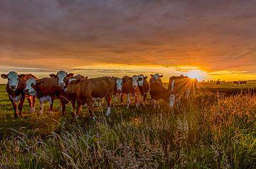 Zonsondergang in de polder von Wim Kanis