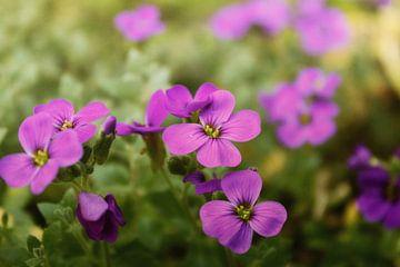 rosa - lila Blüten van Dagmar Marina