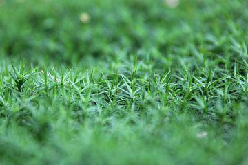 Gros plan sur la couverture végétale