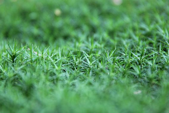 Close-up groene bodembedekking